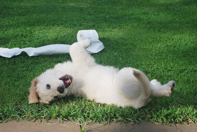 glad hundvalp lekandes