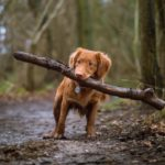 hundforsakring